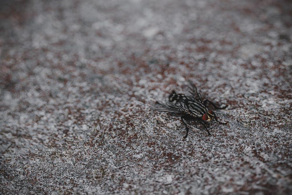 essential oils against flies