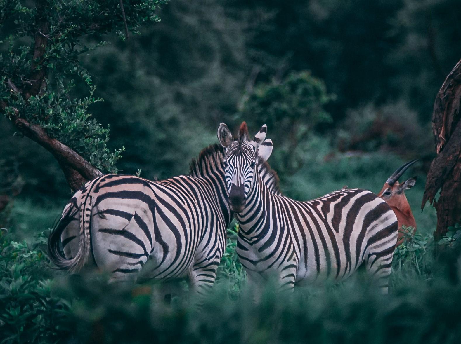 animal eating behavior
