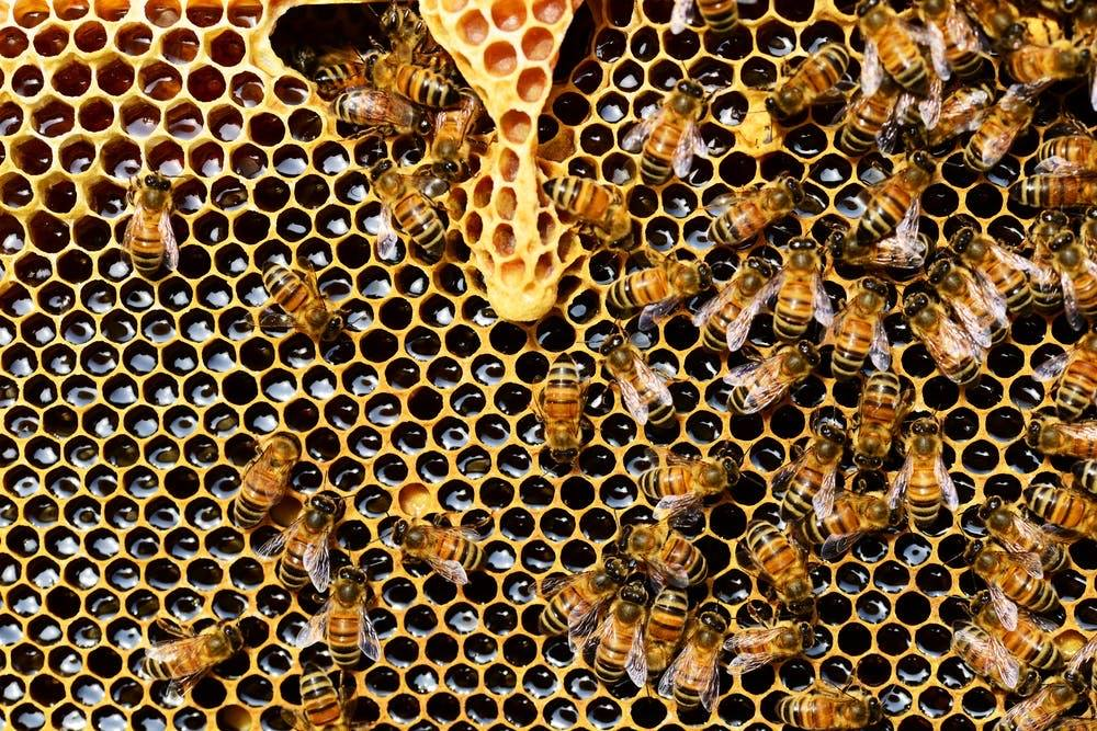 bee-products-grex