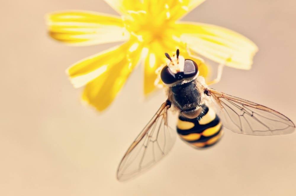 bee-products-ireland