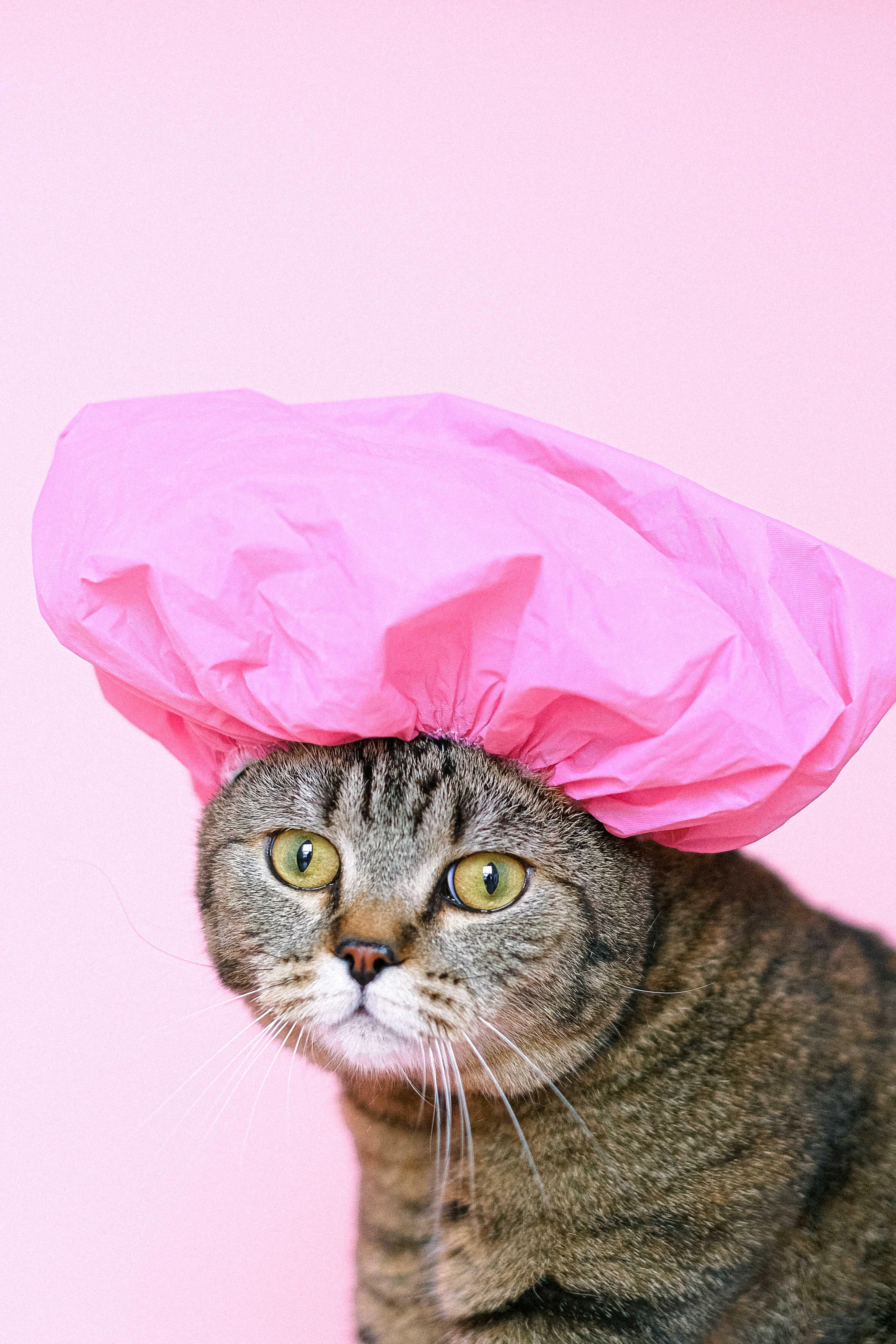 a cat wearing a shower cap