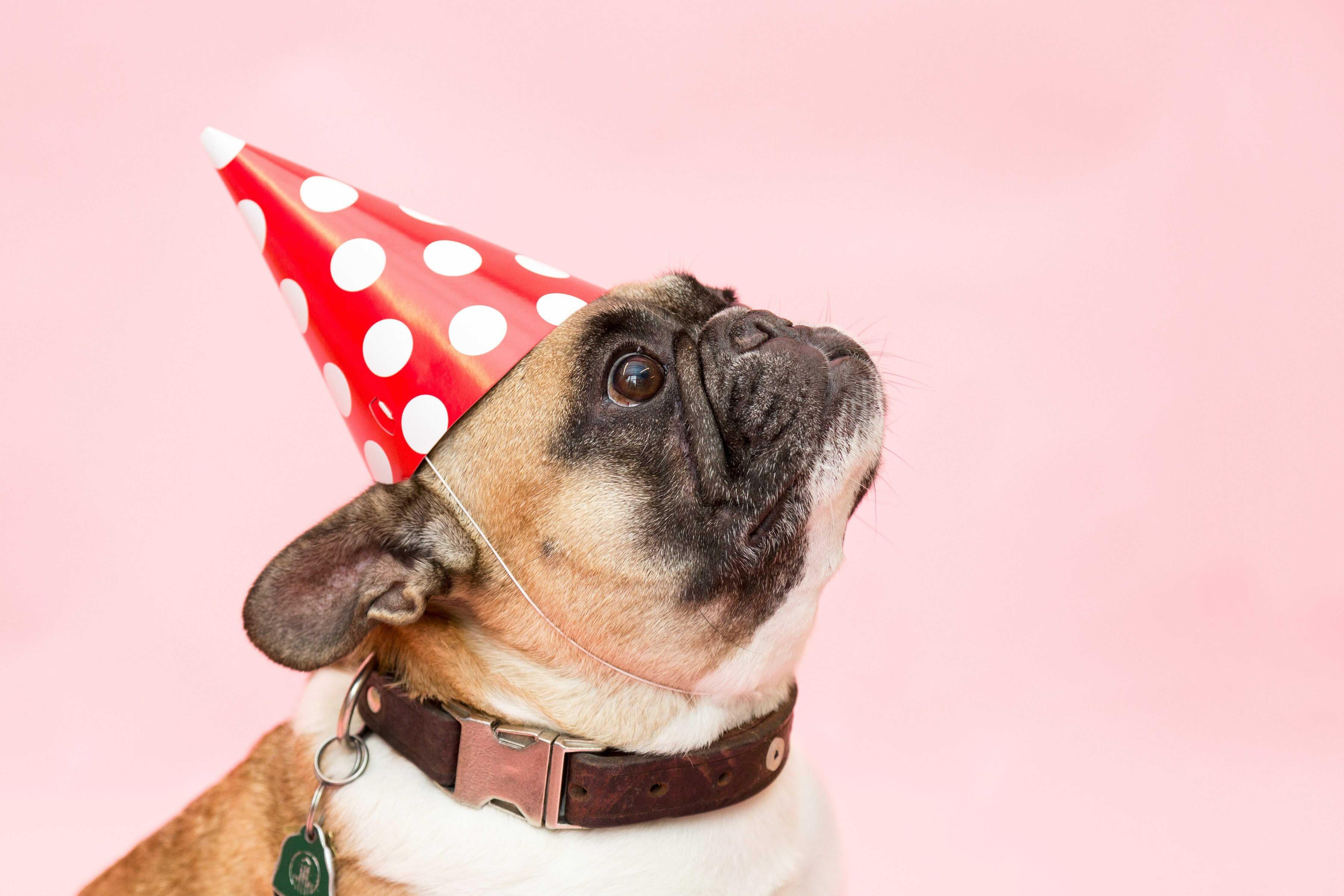 a dog on his birthday