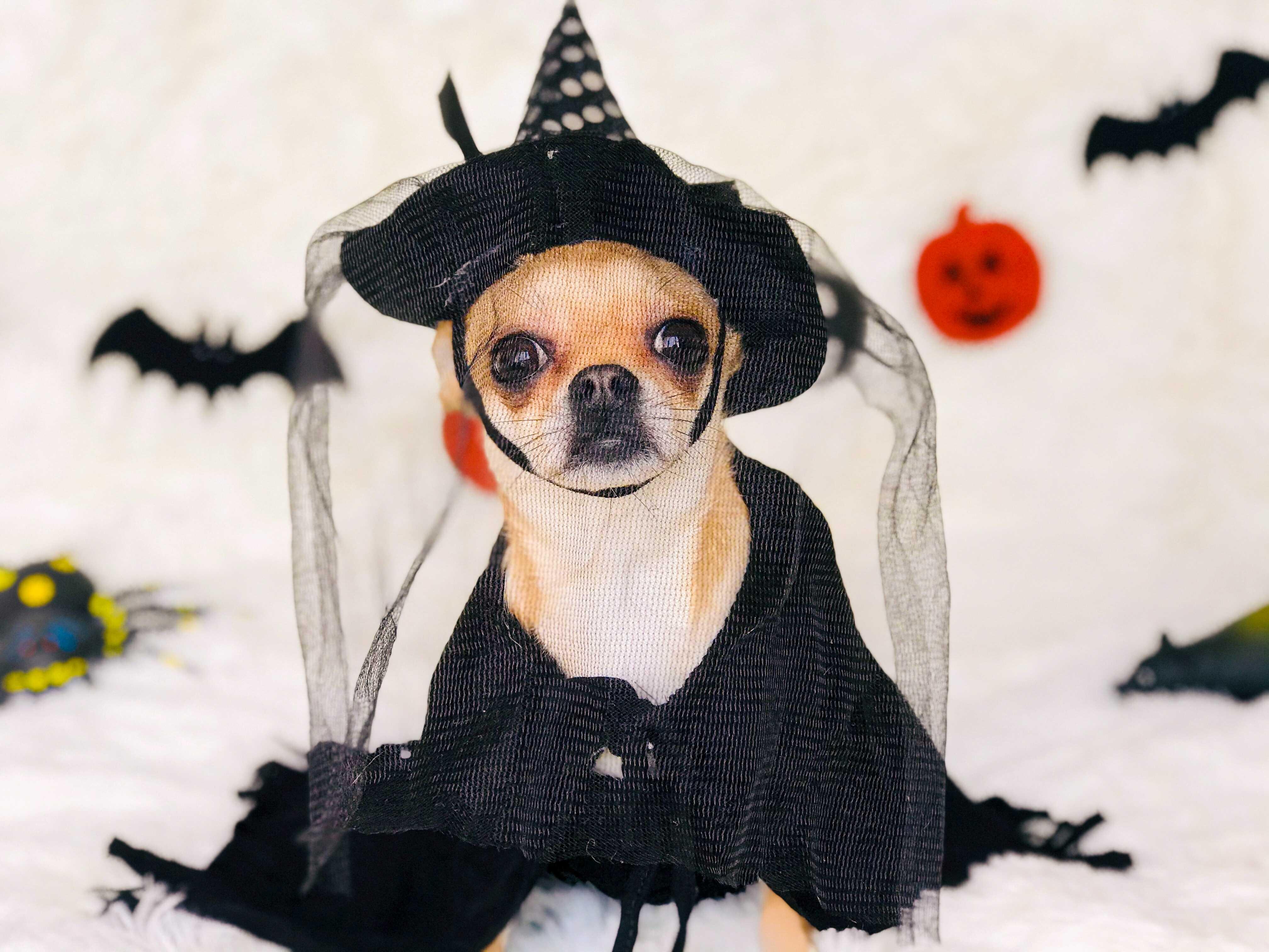 a dog like a witch