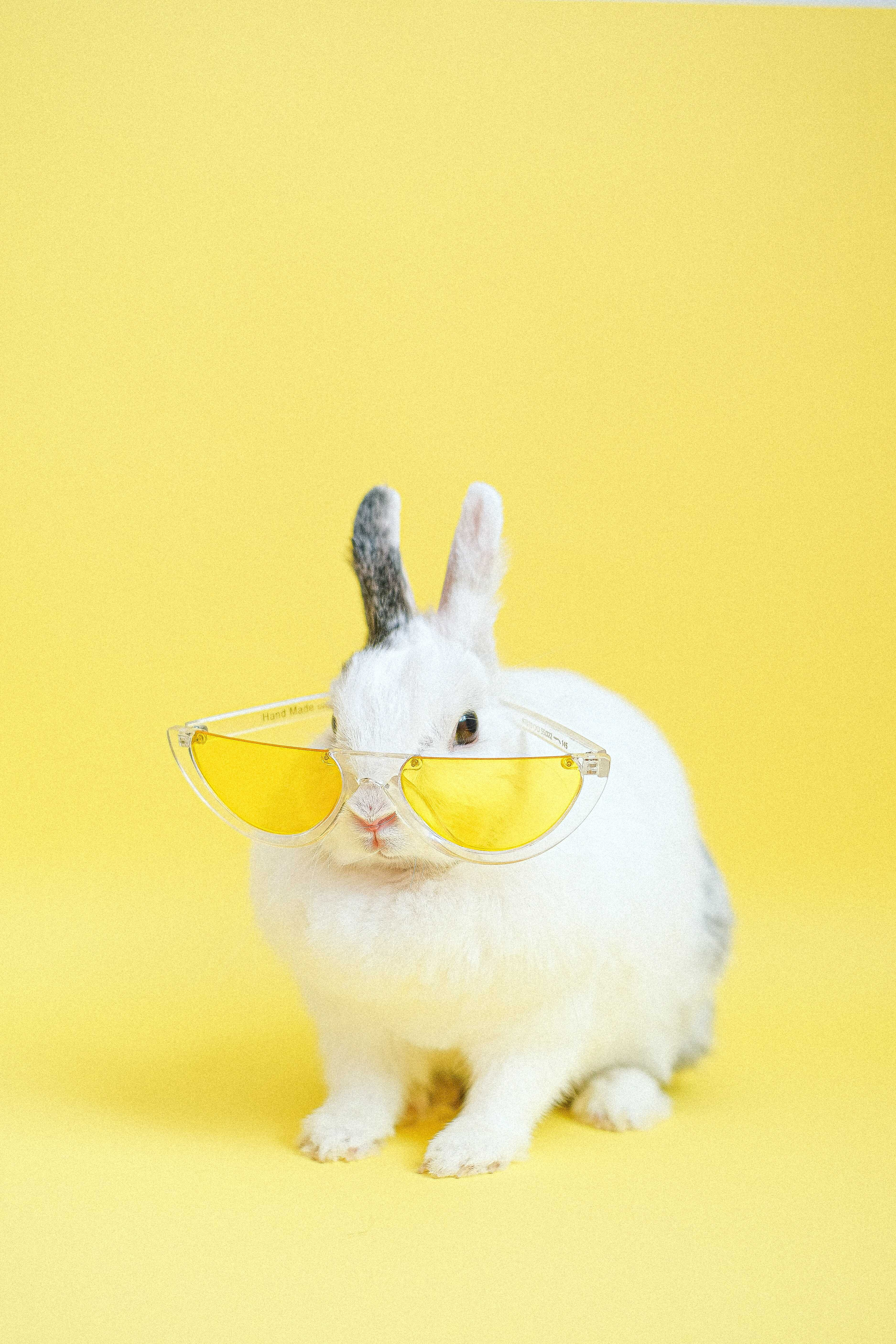 a rabbit wears eyeglasses