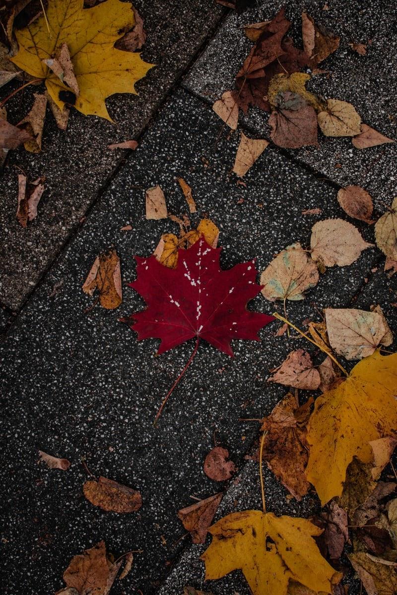 Fall-aesthetic4