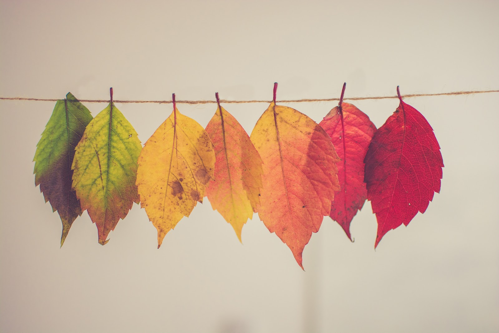 Fall aesthetic wall paper