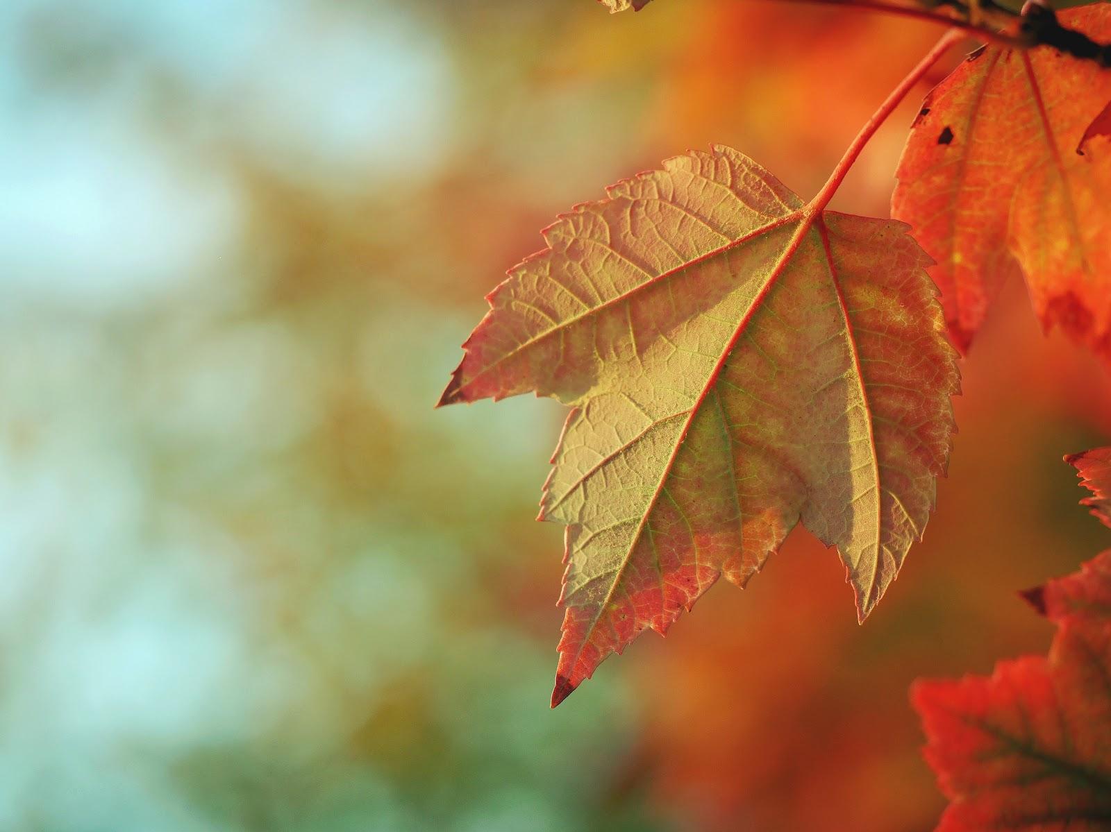 Fall-aesthetic3