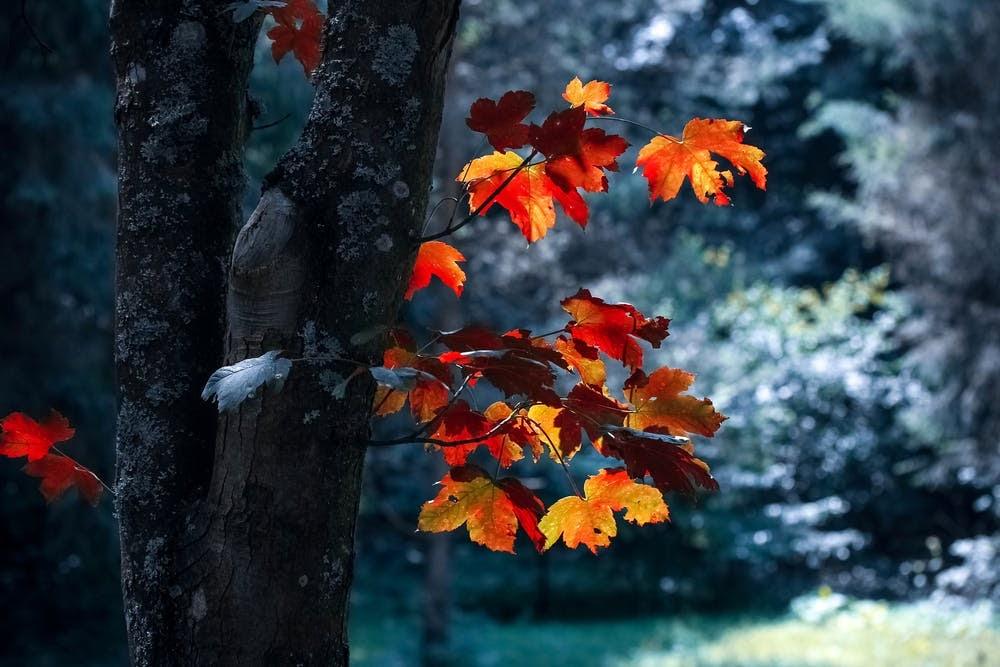 aesthetic-fall2