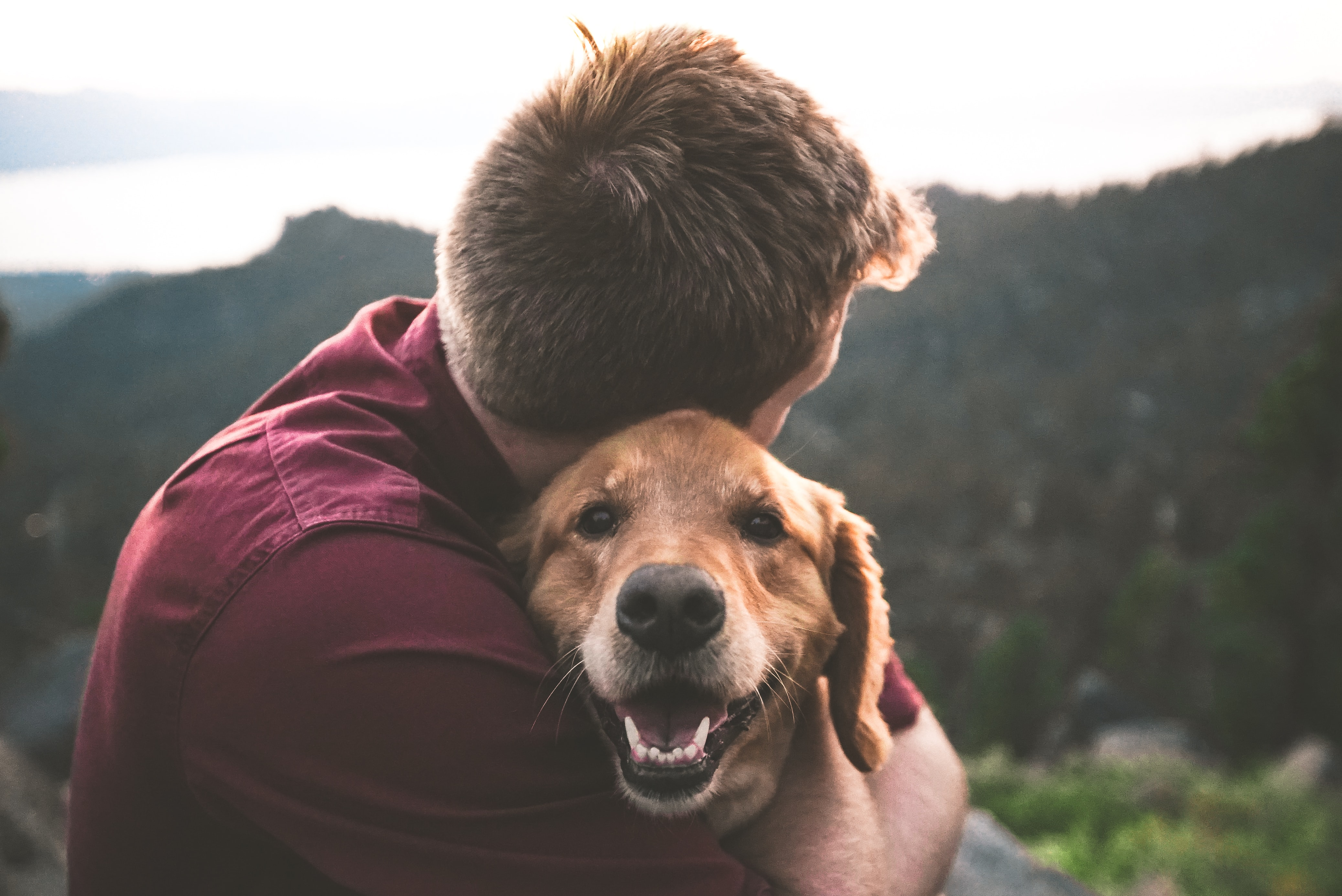 Pet health insurance pre-existing conditions