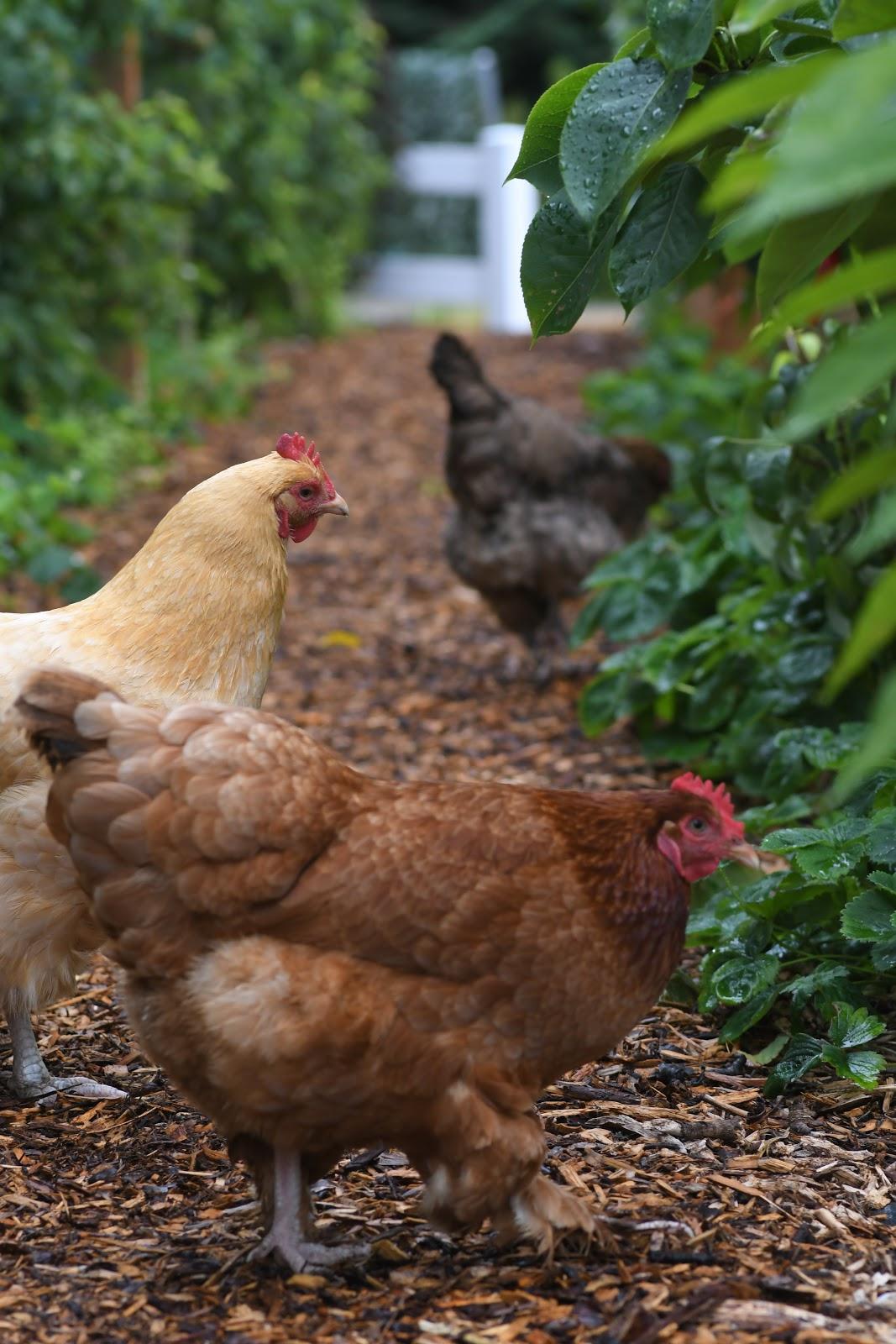 Pbs animal health