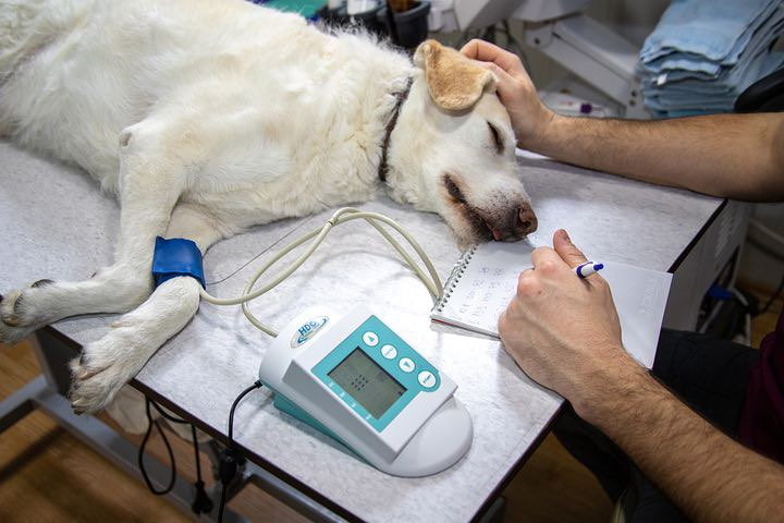 pet health insurance that covers pre-existing conditions