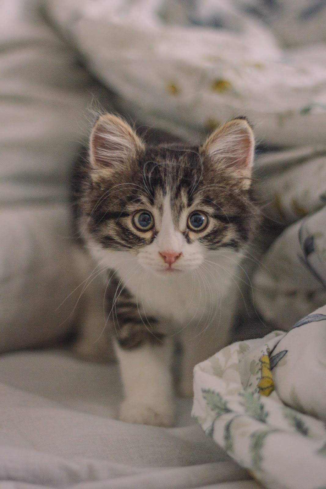 Home Remedies for Cat Vomiting