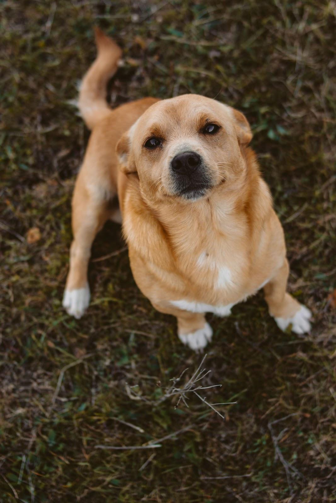 Pet health savings accounts