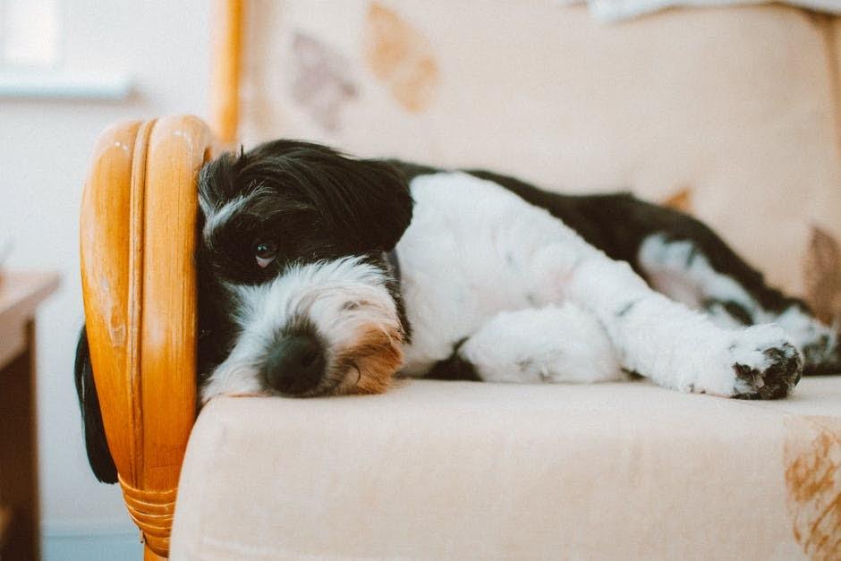 Extend pet health customer service