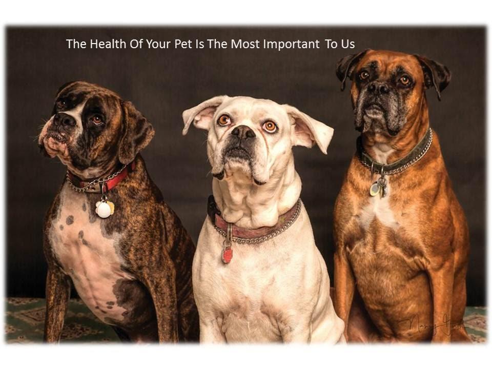 Pet Health Insurance Florida
