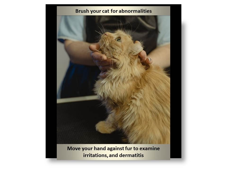 Cat skin problems home remedies
