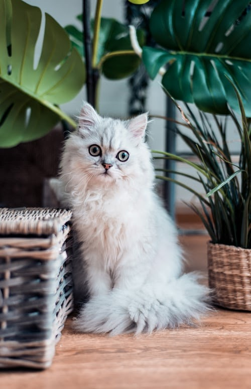 Cats' skin problems