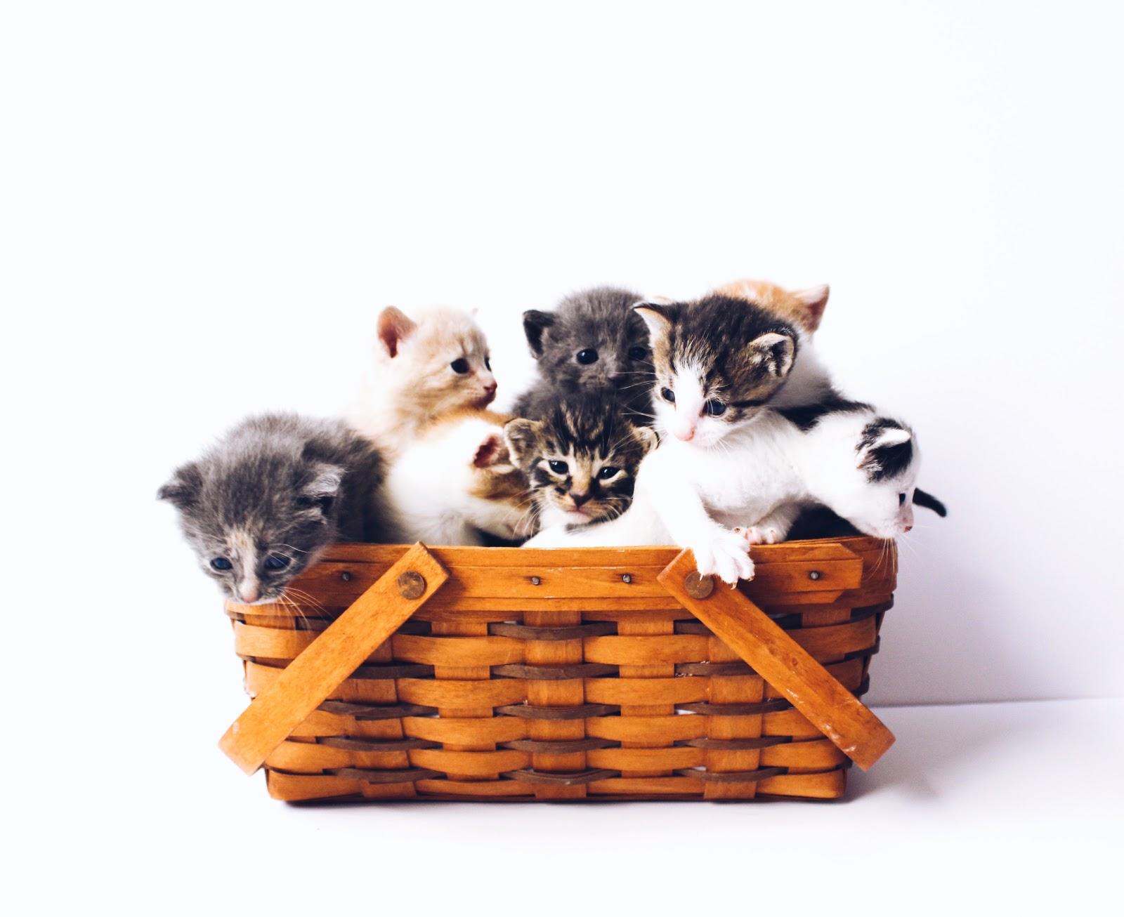 Trupanion pet health insurance