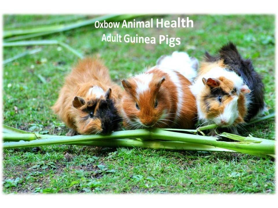 Oxbow Animal Health