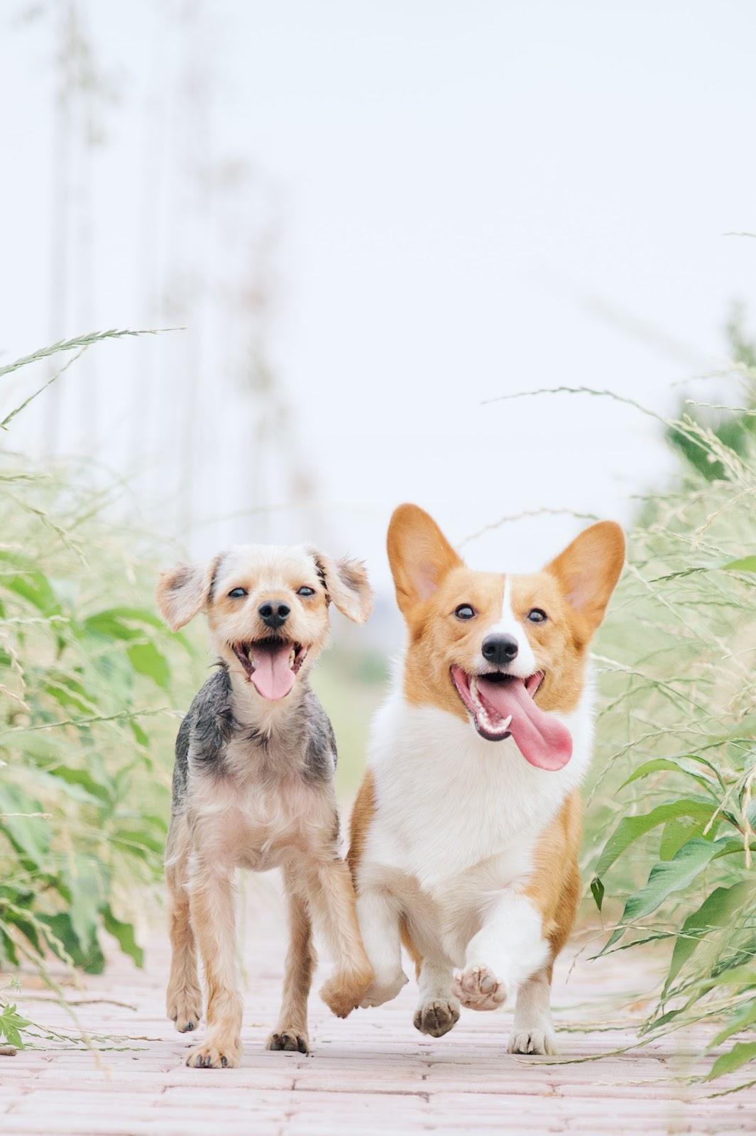 Pet dental health facts