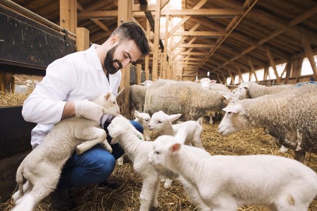 Animal Health plan