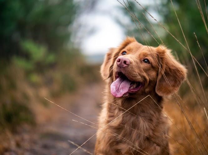 Pet health clinic Nampa