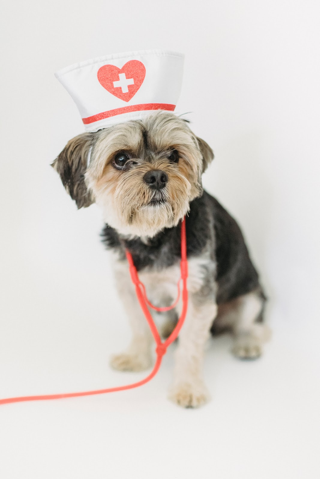 animal health clinic bourne ma