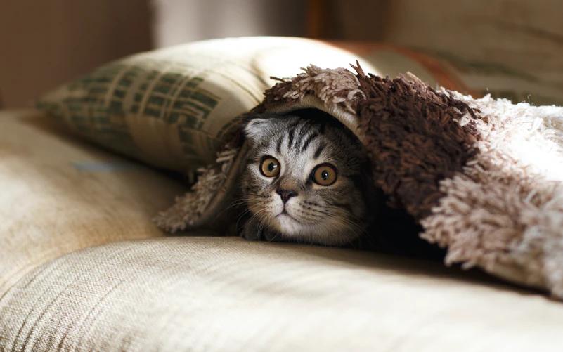 Progressive pet insurance