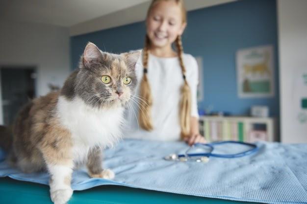 Bivvy pet insurance