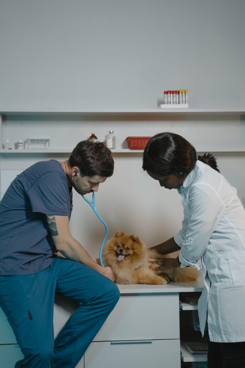 Bethel animal health