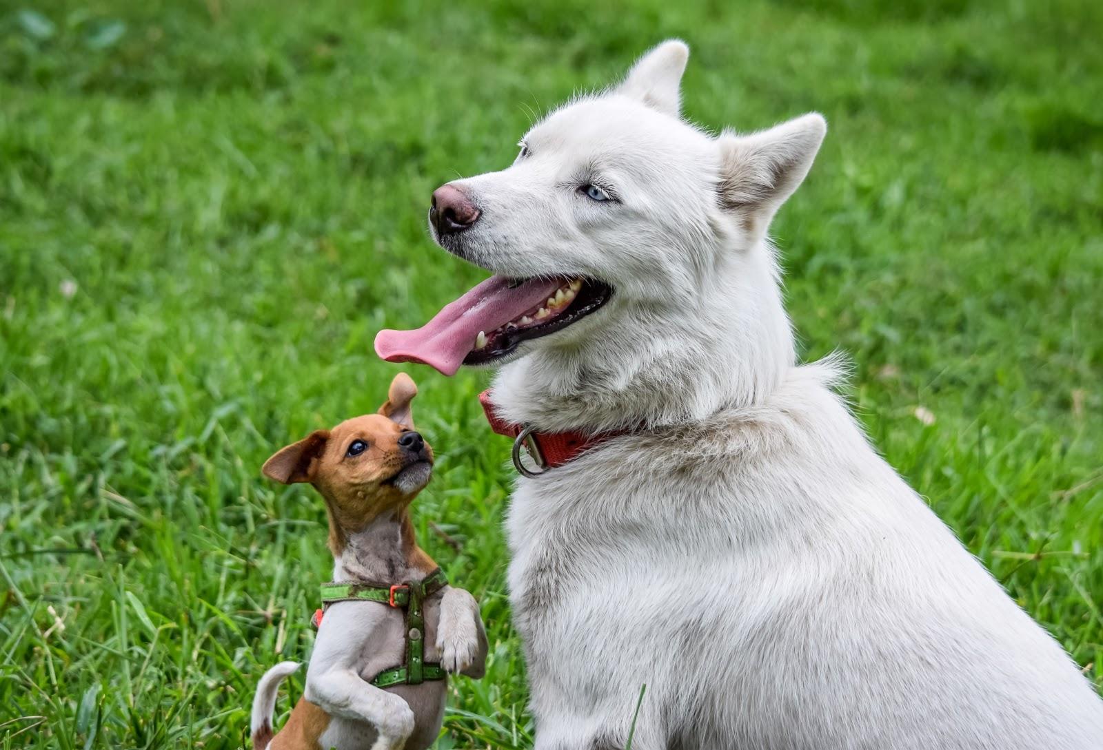 Usaa Pet insurance