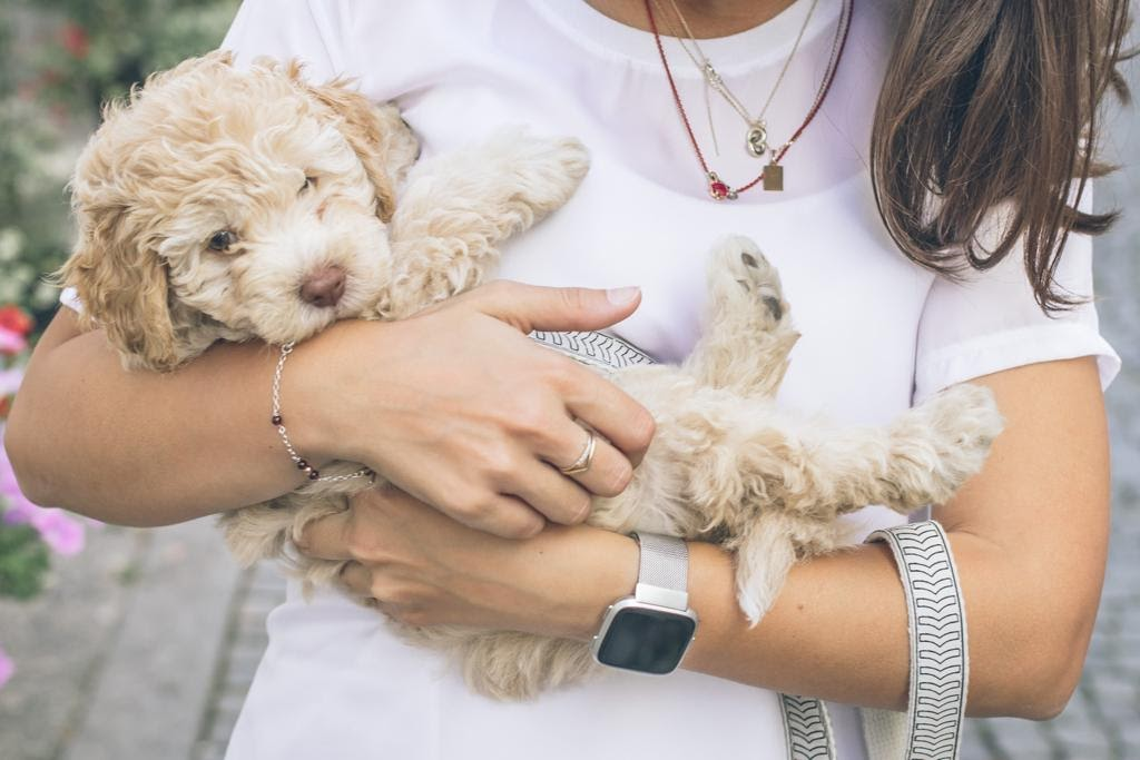 Animal Health And Wellness Center