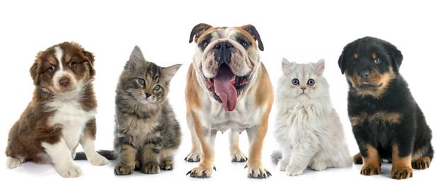 Covertus animal health