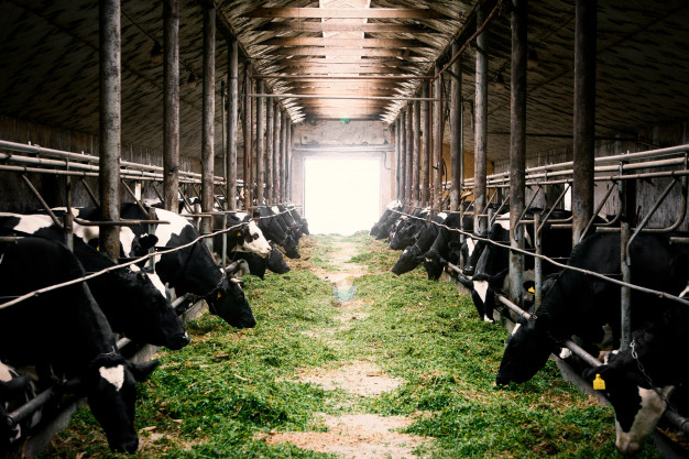 Animal Health international