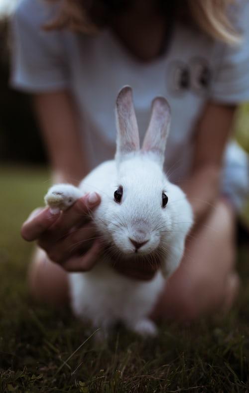 Animal Health Rewards
