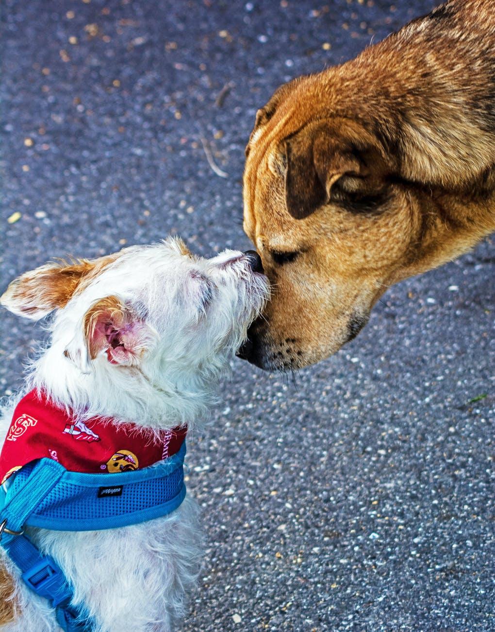 PBS Animal Health Organization