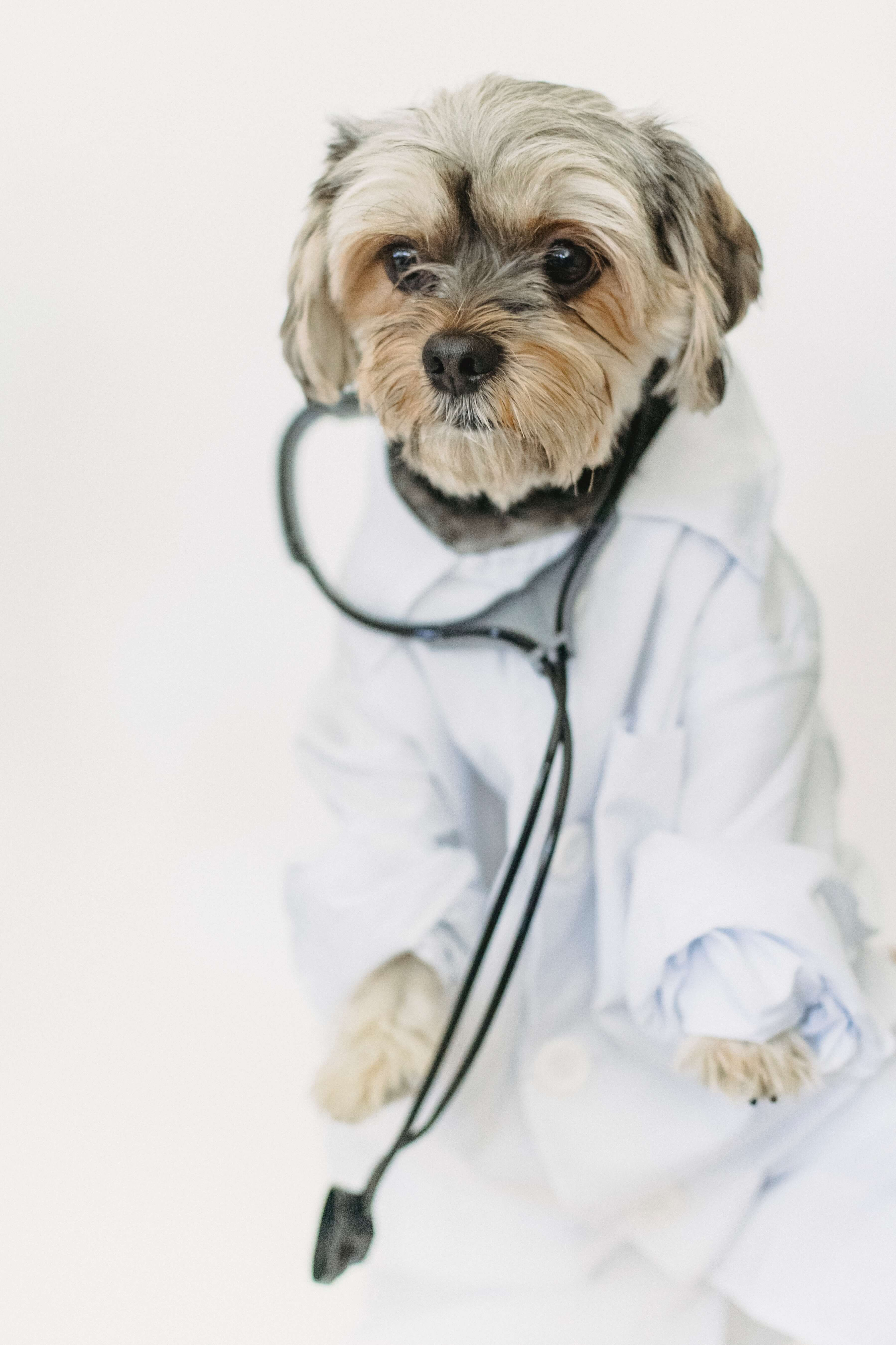 Alliance Animal Health
