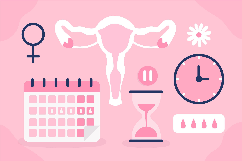 Women's healthcare associates peterkort north