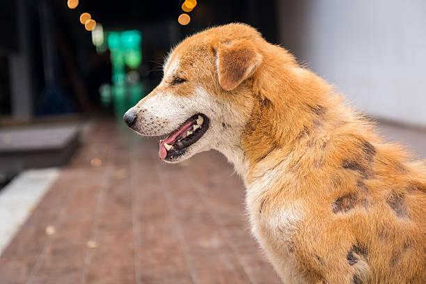 Veterinary health center