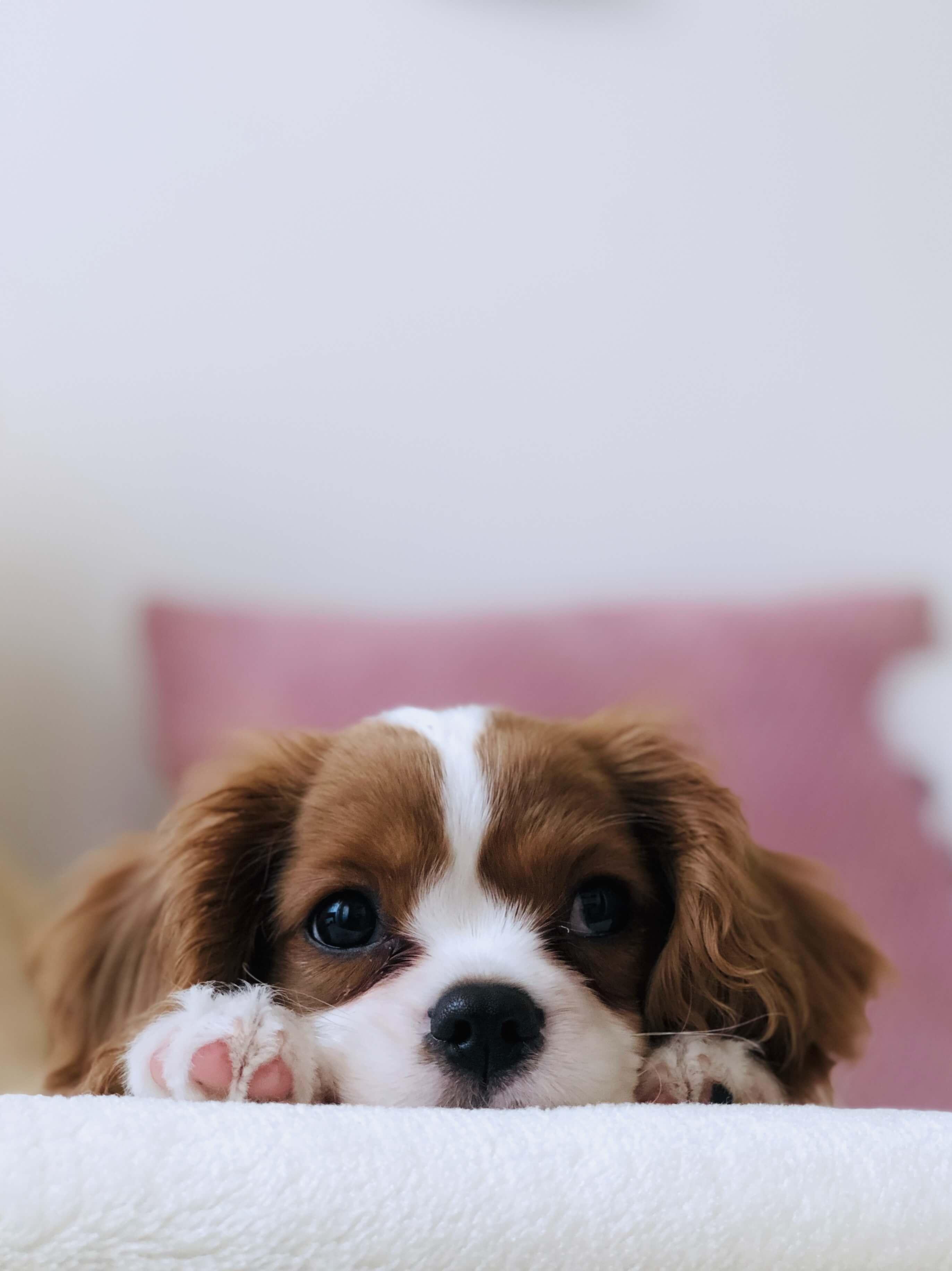 Embrace Pet Insurance Wellness Rewards