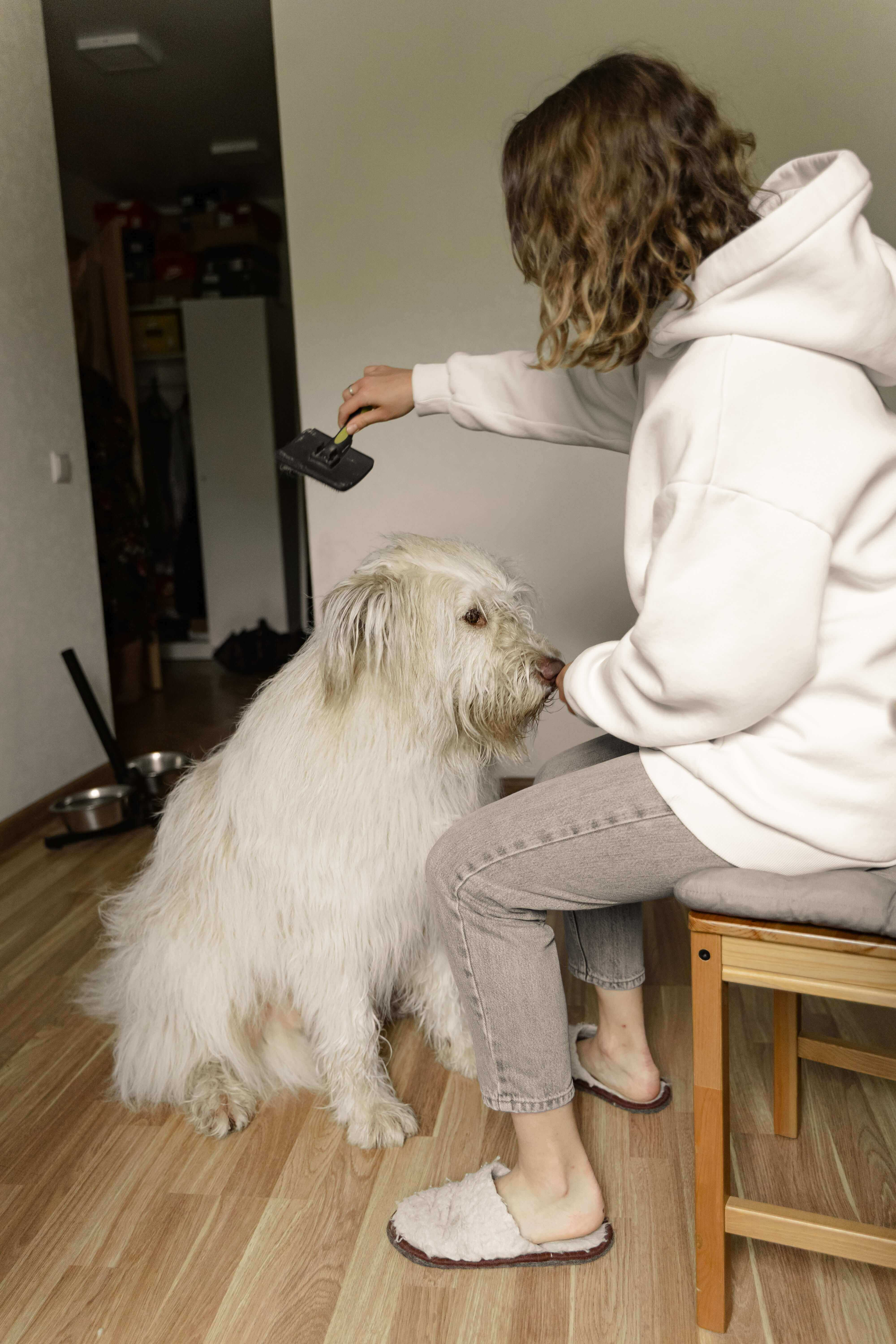 Affordable Pet Dental Care | Best Tips On Organizations And Procedures