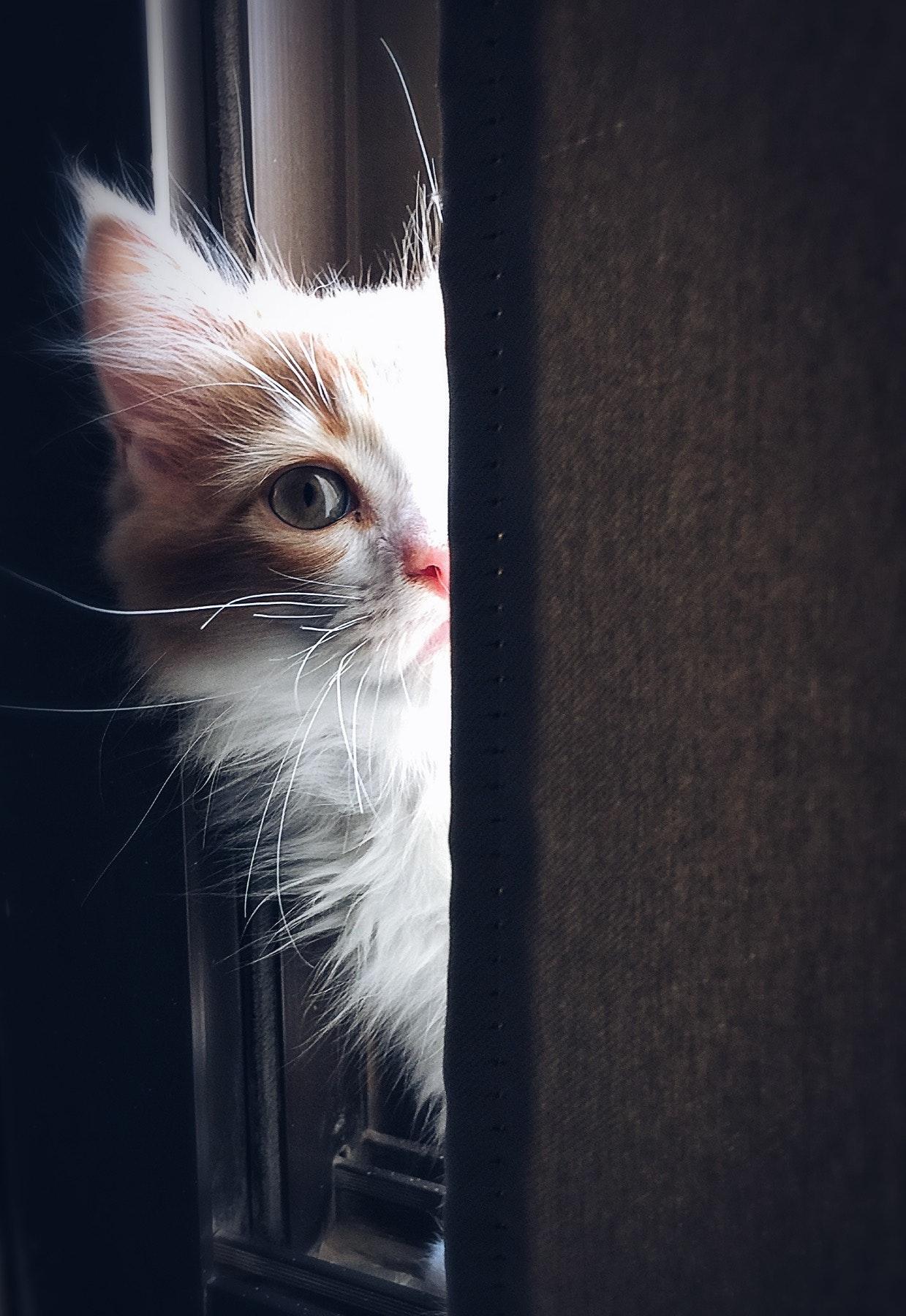 cat clinic orange